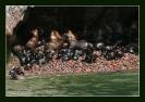 peru - ballestas island